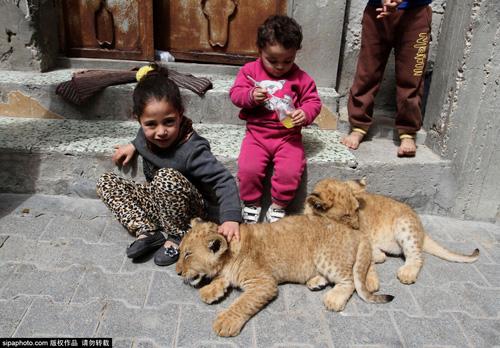 Nuôi 2 chú sư tử làm thú cưng cho con chơi đùa - 10