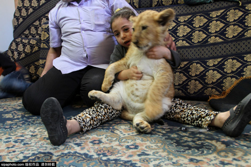 Nuôi 2 chú sư tử làm thú cưng cho con chơi đùa - 14