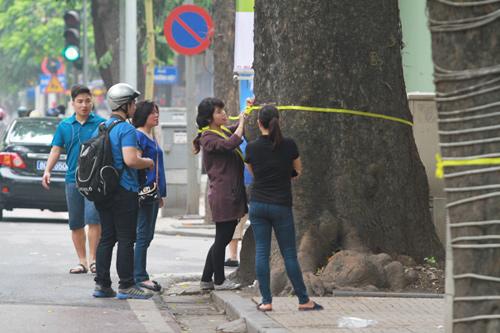 Giới trẻ Hà Thành thắt nơ bảo vệ cây trên phố - 1