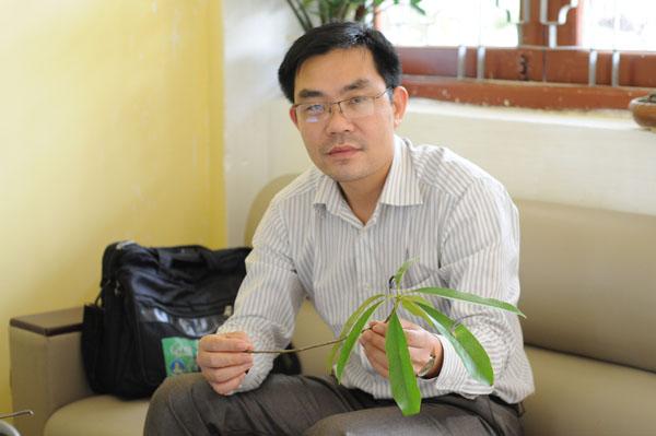 """Chọn Vàng tâm, Hà Nội """"trồng nhầm"""" cây """"gỗ bút chì""""? - 2"""