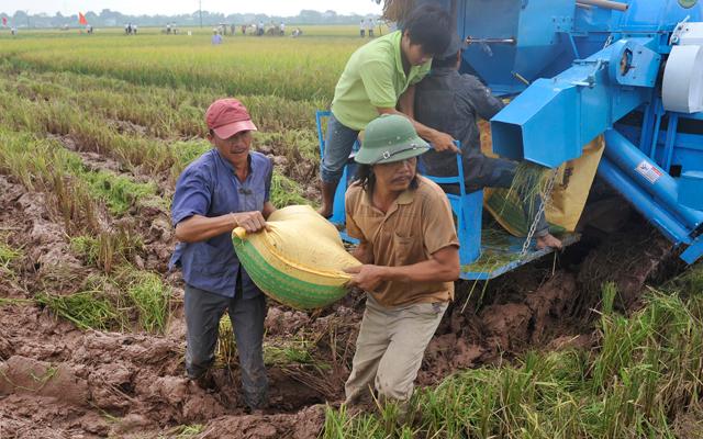 Gạo Việt sẽ đứng đầu thế giới - 1