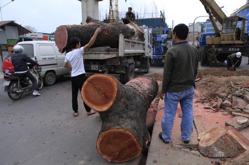 PGĐ Sở Xây dựng HN nói gì khi phải kiểm điểm vì vụ chặt cây? - 1