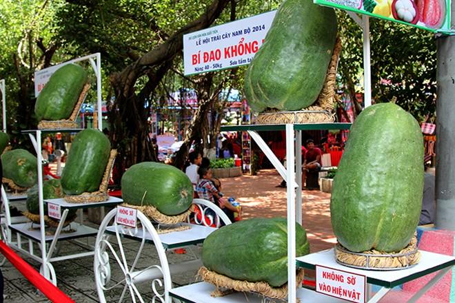 """Những trái to quả """"khủng"""" siêu """"độc"""" trên đất Việt - 6"""