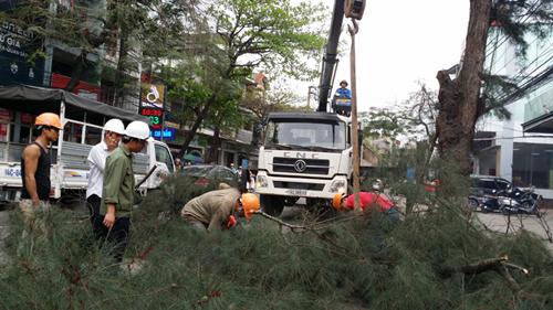 Cây xanh bị đốn hạ ở Hạ Long được dân tự nguyện hiến - 1