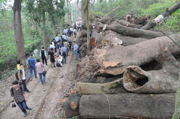 """Vụ 6700 cây xanh: """"Không có chuyện bán gỗ ra ngoài"""" - 2"""