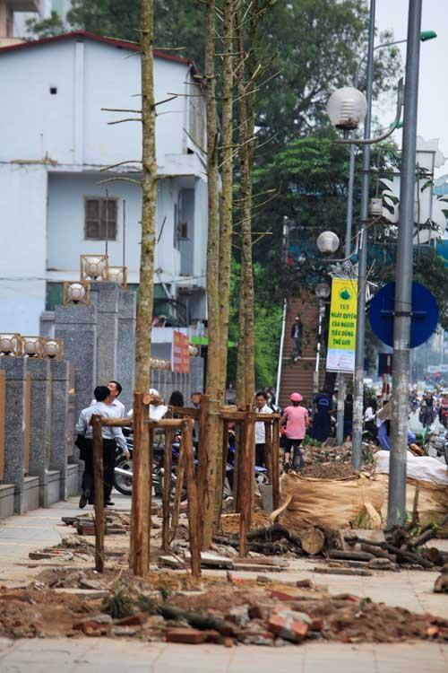10 bài thơ vui, clip hát chế về vụ cưa cây ở Hà Nội - 2