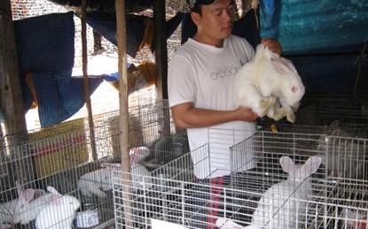 Cử nhân công nghệ về quê nuôi thỏ New Zealand - 1