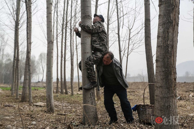 TQ: Lão cụt dắt lão mù trồng 10.000 cây bảo vệ làng - 1