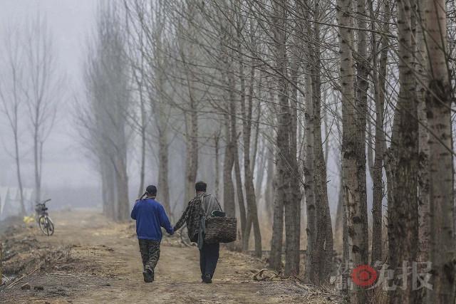 TQ: Lão cụt dắt lão mù trồng 10.000 cây bảo vệ làng - 4