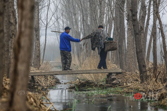 TQ: Lão cụt dắt lão mù trồng 10.000 cây bảo vệ làng - 2