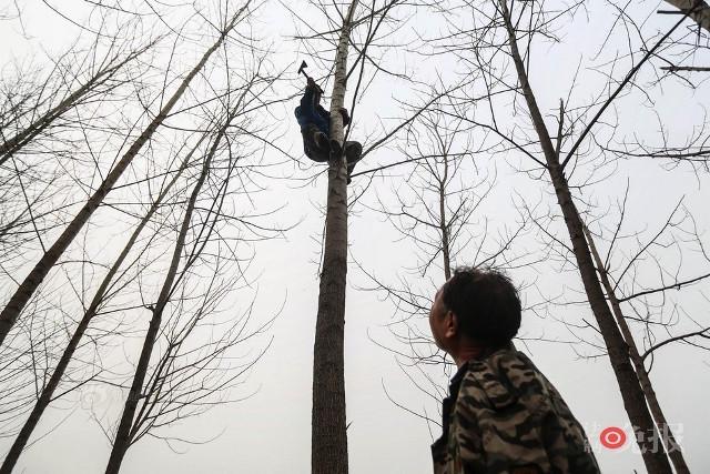 TQ: Lão cụt dắt lão mù trồng 10.000 cây bảo vệ làng - 8