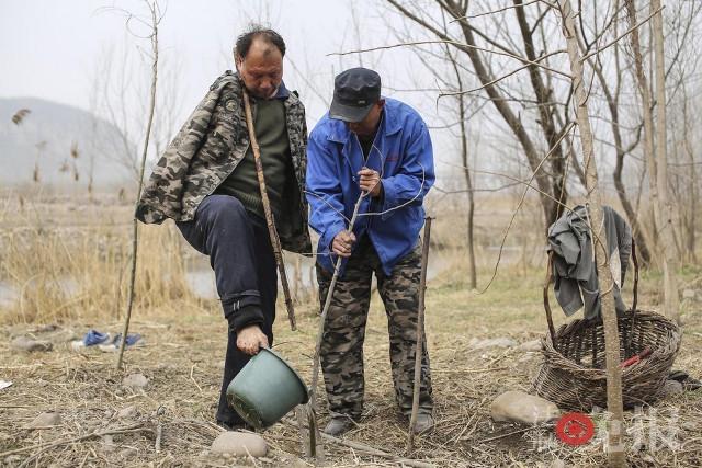 TQ: Lão cụt dắt lão mù trồng 10.000 cây bảo vệ làng - 11