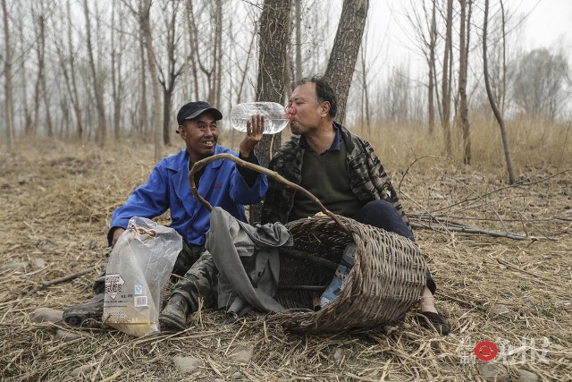 TQ: Lão cụt dắt lão mù trồng 10.000 cây bảo vệ làng - 12