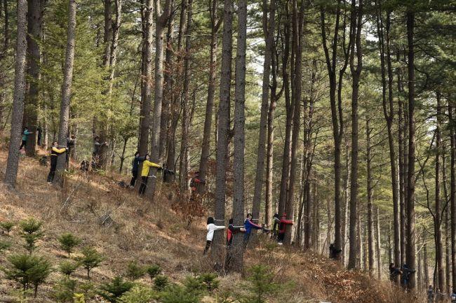 """Ôm cây- """"chiêu độc"""" bảo vệ cây xanh ở Hàn Quốc - 2"""