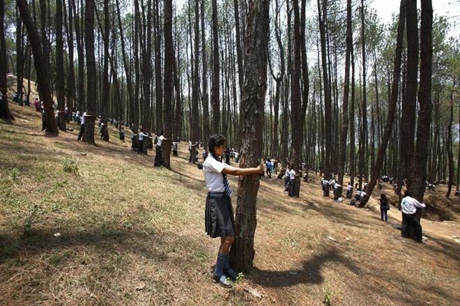 """Ôm cây- """"chiêu độc"""" bảo vệ cây xanh ở Hàn Quốc - 3"""