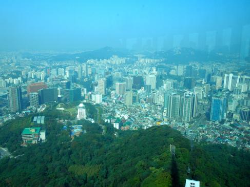 """Ôm cây- """"chiêu độc"""" bảo vệ cây xanh ở Hàn Quốc - 4"""