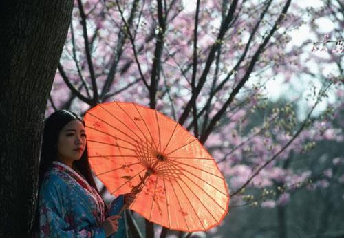 Đắm chìm trong sắc hoa anh đào nở rộ khắp châu Á - 7