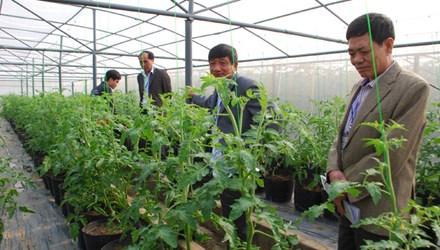 Tỷ phú đô la thích trồng rau - 1
