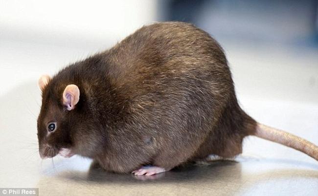 Những động vật béo phì đáng yêu nhất thế giới - 13