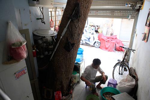 HN: Cây đâm xuyên nhà, vẫn quyết giữ dù được trả trăm triệu - 5