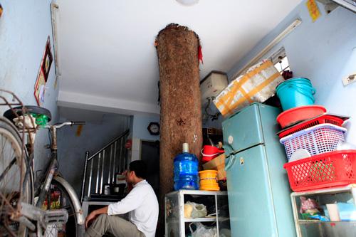 HN: Cây đâm xuyên nhà, vẫn quyết giữ dù được trả trăm triệu - 4