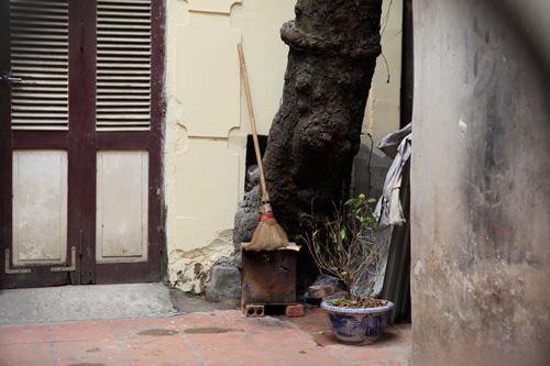 HN: Cây đâm xuyên nhà, vẫn quyết giữ dù được trả trăm triệu - 13