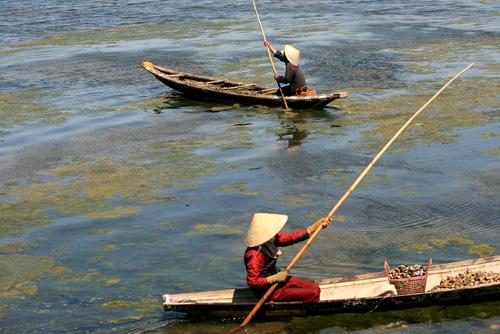 Ảnh: Cuộc sống bình dị trên phá Tam Giang - 8