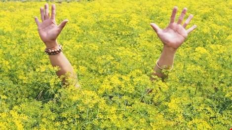 Về xứ công tử Bạc Liêu ngắm hoa cải nở vàng bến sông - 1
