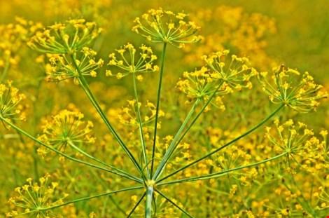 Về xứ công tử Bạc Liêu ngắm hoa cải nở vàng bến sông - 5
