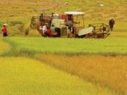 """Thị trường - Tiêu dùng - Nông nghiệp năm 2015: Sức bật trong khó khăn """"kép"""""""