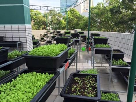 Thêm một trường học làm vườn rau sạch cho học sinh - 1
