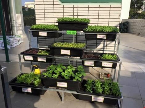 Thêm một trường học làm vườn rau sạch cho học sinh - 4