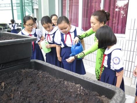 Thêm một trường học làm vườn rau sạch cho học sinh - 5