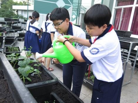 Thêm một trường học làm vườn rau sạch cho học sinh - 6