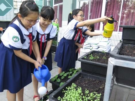 Thêm một trường học làm vườn rau sạch cho học sinh - 7