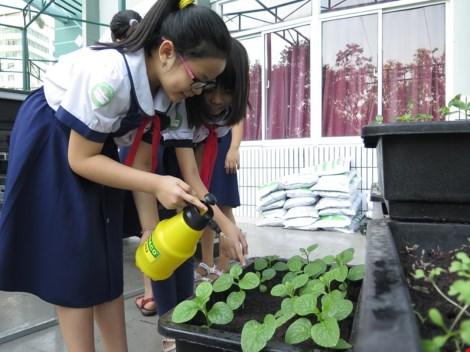 Thêm một trường học làm vườn rau sạch cho học sinh - 8