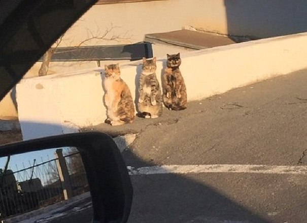 Thích thú với 3 chú mèo đứng bằng hai chân - 2