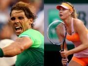 Thể thao - Doha, Brisbane ngày 2: Sharapova, Halep rút lui