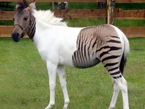 Phi thường - kỳ quặc - Những động vật lai có vẻ ngoài kỳ quặc 'khó đỡ'