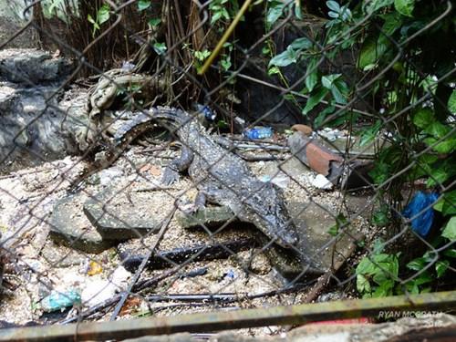 Công viên bỏ hoang ở Huế xuất hiện rùng rợn trên báo Mỹ - 11