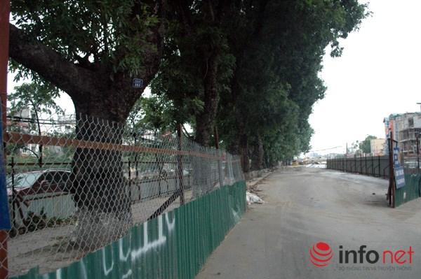Hà Nội: Loạt cây cổ thụ đường Láng chính thức bị đốn hạ - 1