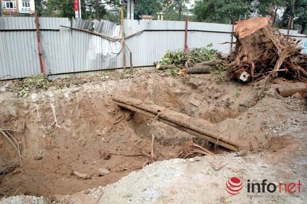 Hà Nội: Loạt cây cổ thụ đường Láng chính thức bị đốn hạ - 14