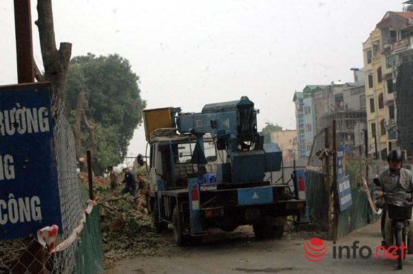 Hà Nội: Loạt cây cổ thụ đường Láng chính thức bị đốn hạ - 2