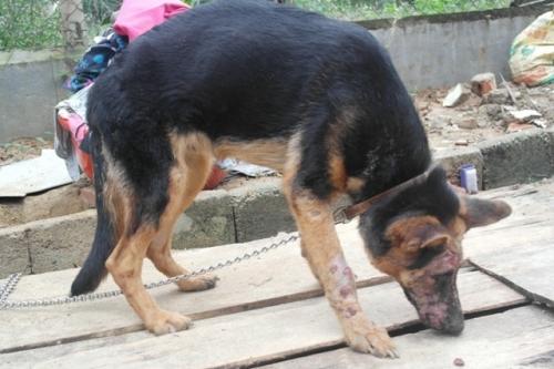 Chàng trai Hà Tĩnh thuê trọ cứu chó mèo bị bỏ rơi ở Huế - 10