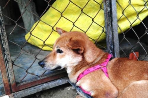Chàng trai Hà Tĩnh thuê trọ cứu chó mèo bị bỏ rơi ở Huế - 9