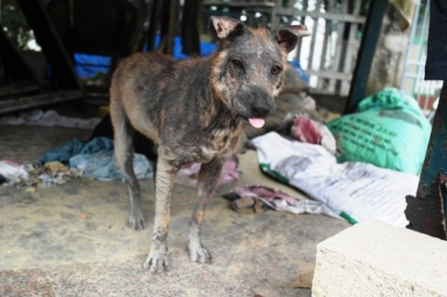 Chàng trai Hà Tĩnh thuê trọ cứu chó mèo bị bỏ rơi ở Huế - 6