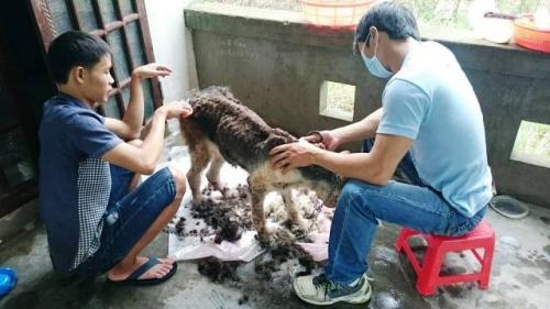 Chàng trai Hà Tĩnh thuê trọ cứu chó mèo bị bỏ rơi ở Huế - 4