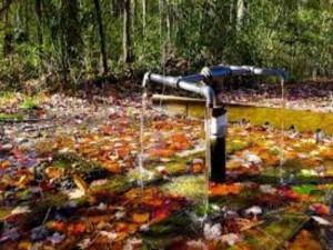 Bí ẩn những dòng suối có khả năng 'cải tử hoàn sinh'