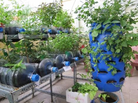 Lạ mắt vườn cây từ vật dụng tái chế của học sinh lớp 8 - 1