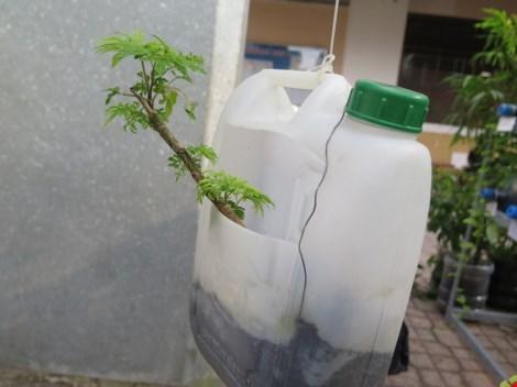 Lạ mắt vườn cây từ vật dụng tái chế của học sinh lớp 8 - 11